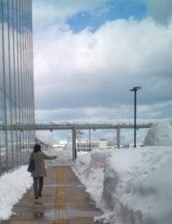 Aomori_yuki