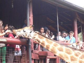 Giraffecentre_2