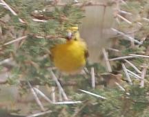 20120702gatebird_2